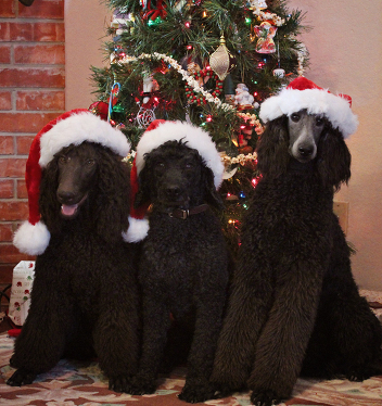 Mocha, Flash, and Jazz would like to wish you all a very Merry Christmas!