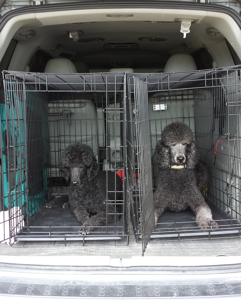Suv Kennels Dogs 2017 2018 2019 Ford Price Release